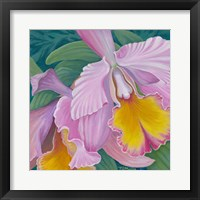 Framed Orchid Series 4