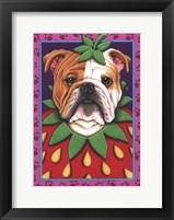 Framed Bulldog Strawberry