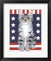 Framed Patriot Cat