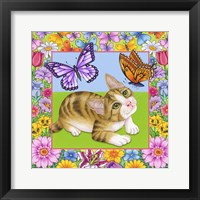 Framed Butterfly Kitten