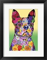 Framed Flowers Boston Terrier