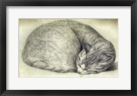 Framed Sleeping Cat