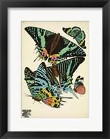 Framed Papillons 7