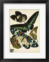 Framed Papillons 10
