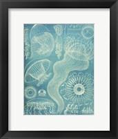Framed Jellyfish Sealife