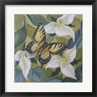 Framed Large Butterfly and Trillium