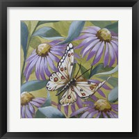 Framed Large Butterfly and Echinacea