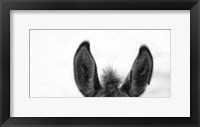 Framed All Ears
