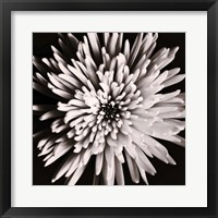 Framed Dark Flower