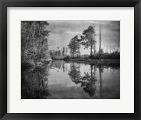 Framed Dark Swamp