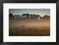 Framed Deer at Daybreak