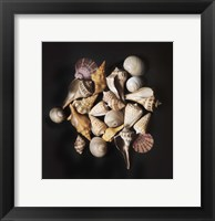 Framed Sea Shell Collection