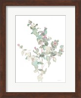 Framed Eucalyptus II White