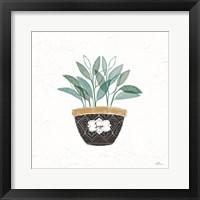 Framed Fine Herbs VII