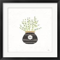 Framed Fine Herbs VI