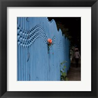 Framed Rose on Pentonville