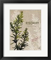 Framed Organic Rosemary No Butterfly