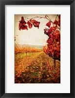 Framed Autumn Vines