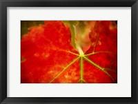Framed Autumn's Fire