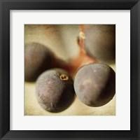 Framed Berries 5