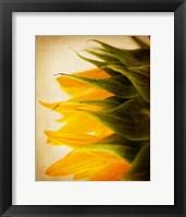 Framed Late Bloomer
