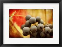 Framed Late Harvest