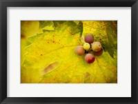 Framed Leaf and Cluster 1