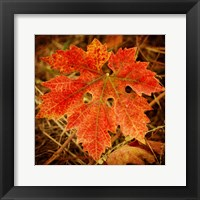 Framed Ochre Foliage