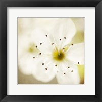 Framed Of Spring