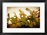 Framed Sunset Vines