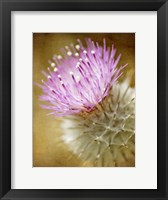 Framed Thistle Bloom