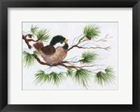 Framed Chickadee On A Pine Tree