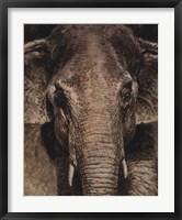 Framed Elephant Portrait