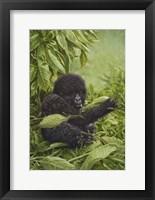 Framed Prince Of The Virungas