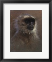 Framed Monkey Portrait