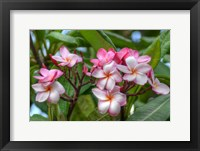 Framed Pink Splendor