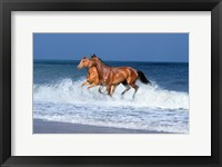 Framed 2 Horses Sea