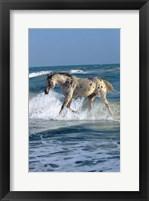 Framed Appaloosa Sea