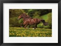Framed Buttercup Run