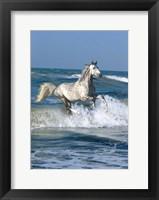 Framed Dapple Sea