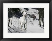 Framed Snow Chase