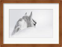 Framed White Horse