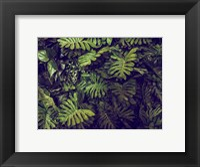 Framed Tropical 4