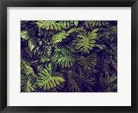 Framed Tropical 4