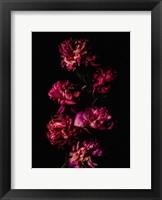 Framed Dark Flowers
