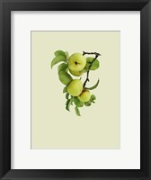 Framed Apple Tree I