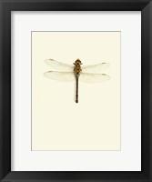 Framed Dragonfly I