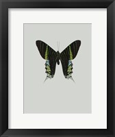 Framed Green Butterfly