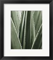 Framed Leaf I