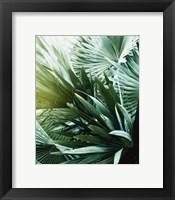 Framed Leaf II